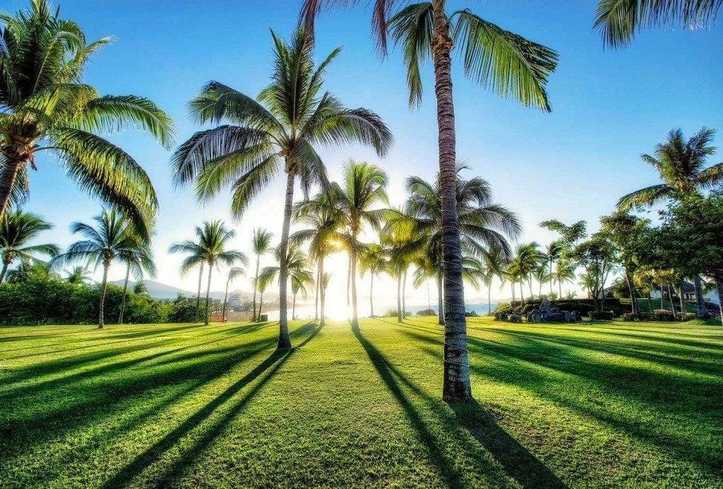 Creative Edit: Palm Tree Shadows - Tim Martin
