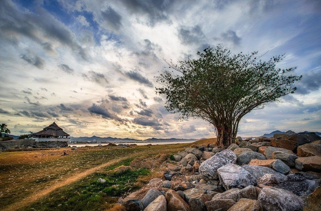 Creative Edit: Hurricane Tree - Tim Martin