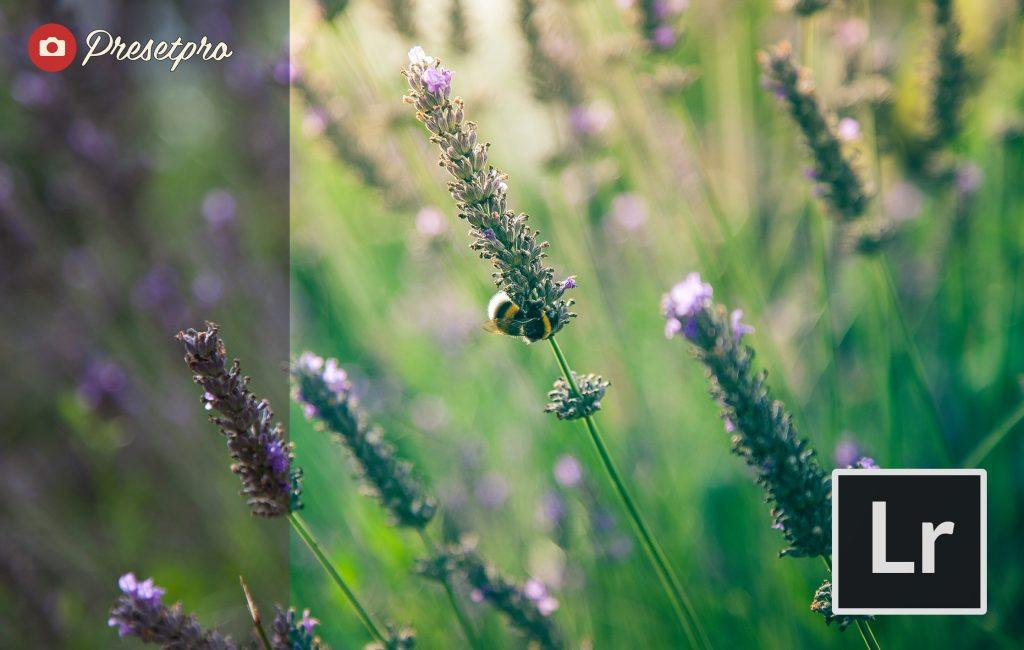 Free-Lightroom-Presets-Sunny-Fields-Presetpro