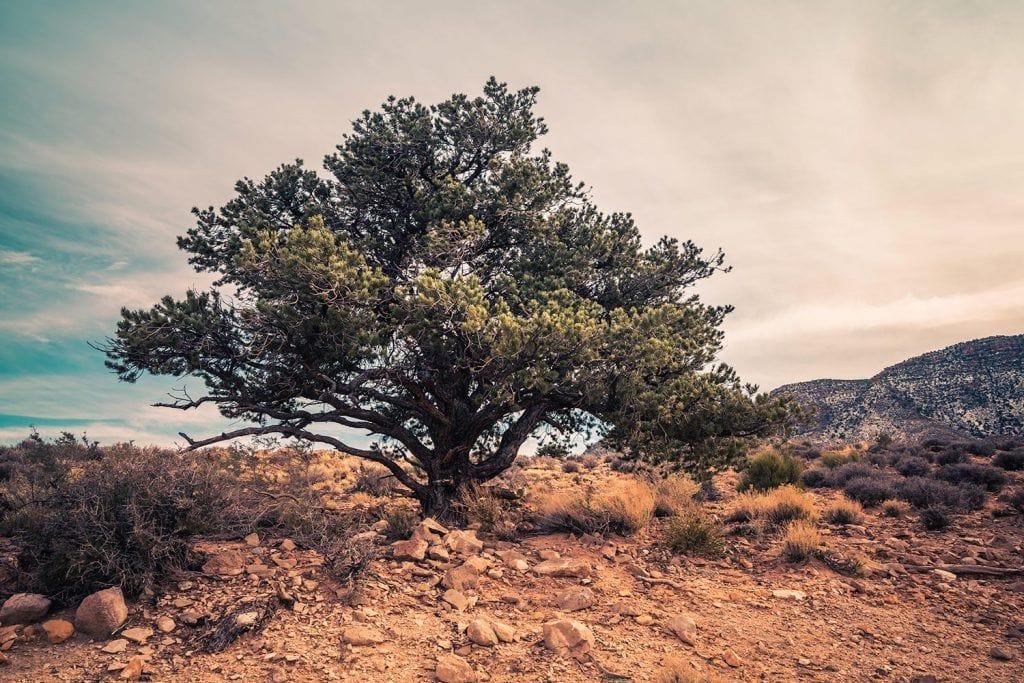 Landscape Photography - Desert-Tree