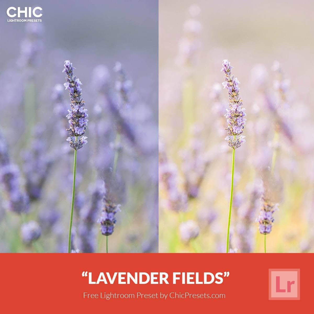 Free-Lightroom-Preset-Lavender-Fields-5