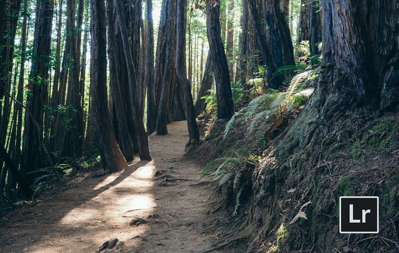 Free-Lightroom-Preset-Redwoods-Before-and-After-Presetpro