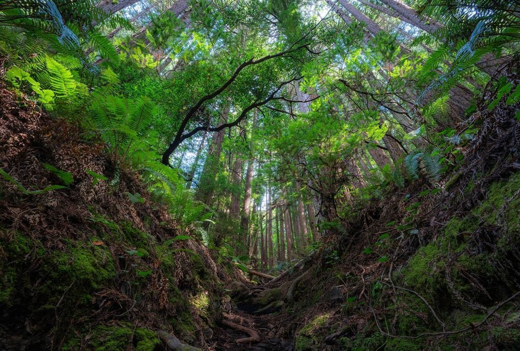 HDR-Photography-Redwood-Cathedral-Presetpro.com