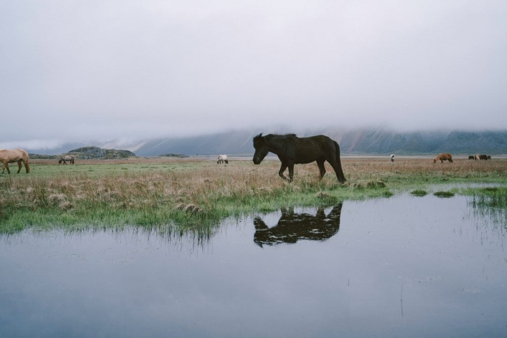 Film Emulation Lightroom Presets - Iceland Horse