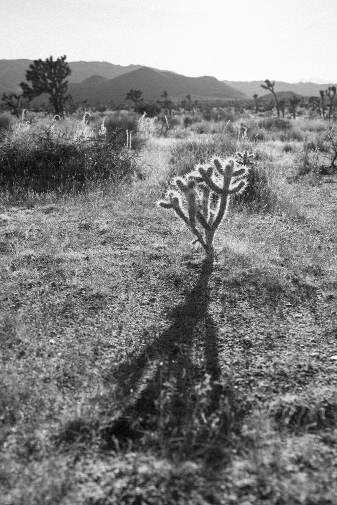 Film Emulation Lightroom Preset - Long Shadow in Joshua Tree National Park