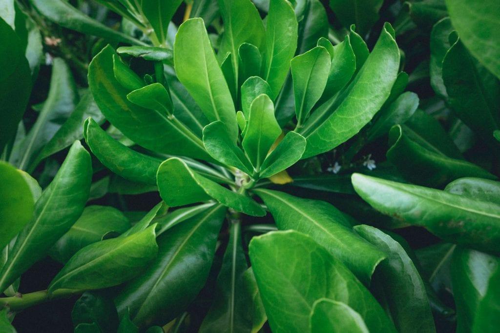 Film Emulation Lightroom Presets - Lush Leaf