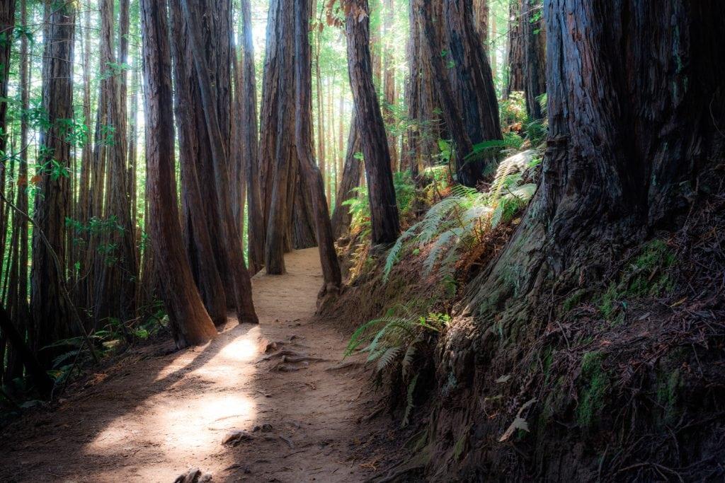 HDR-Photography-Through-The-Trees-Presetpro.com