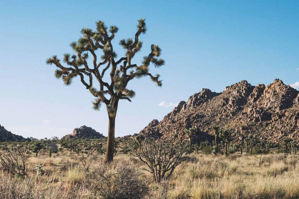 Film Emulation Lightroom Presets - Joshua Tree