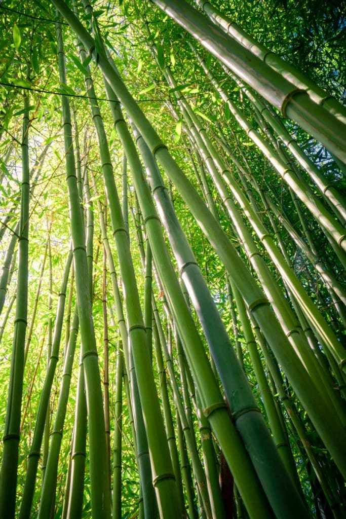Landscape-Photography-Bamboo-Light-Presetpro.com