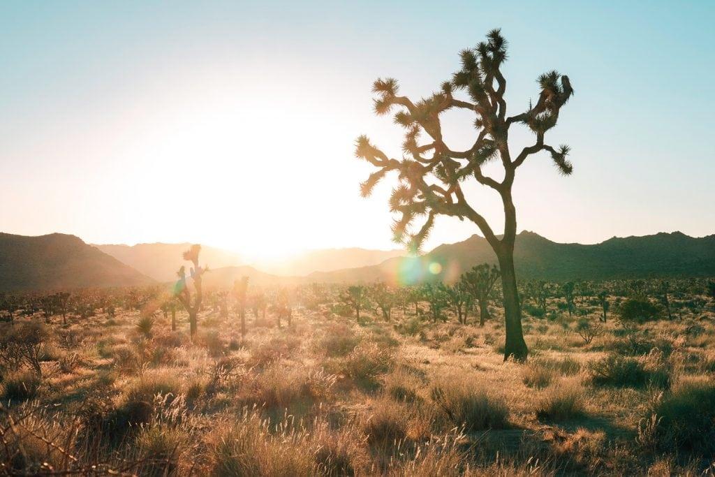 Photography-Sun-Flare-Joshua-Tree-Presetpro.com