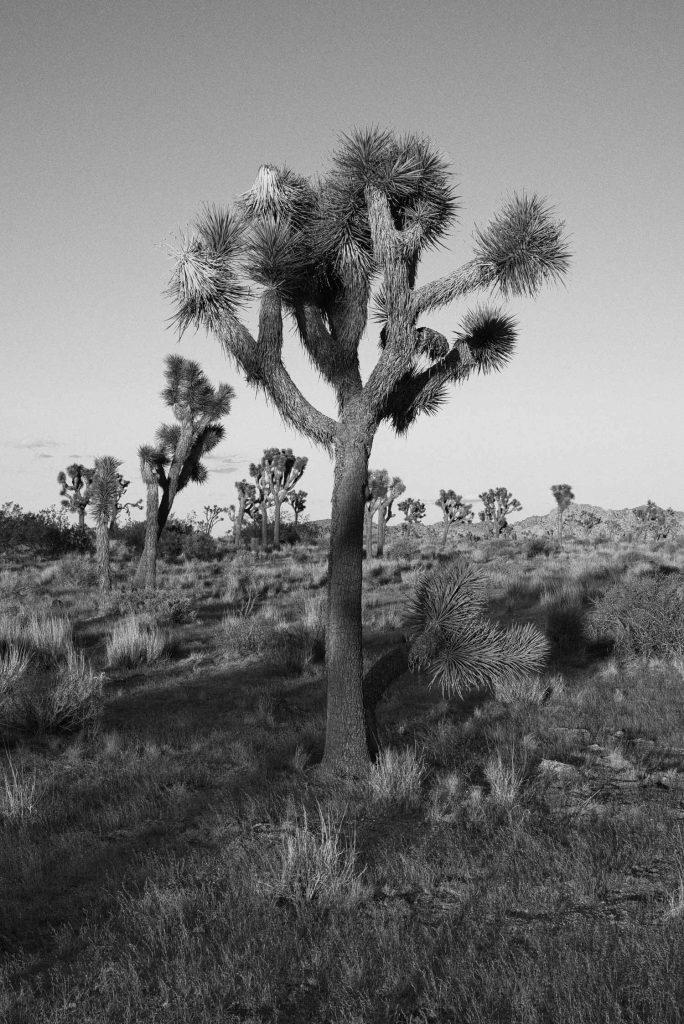 Photography-Long-Shadows-in-Joshua-Tree-Presetpro.com