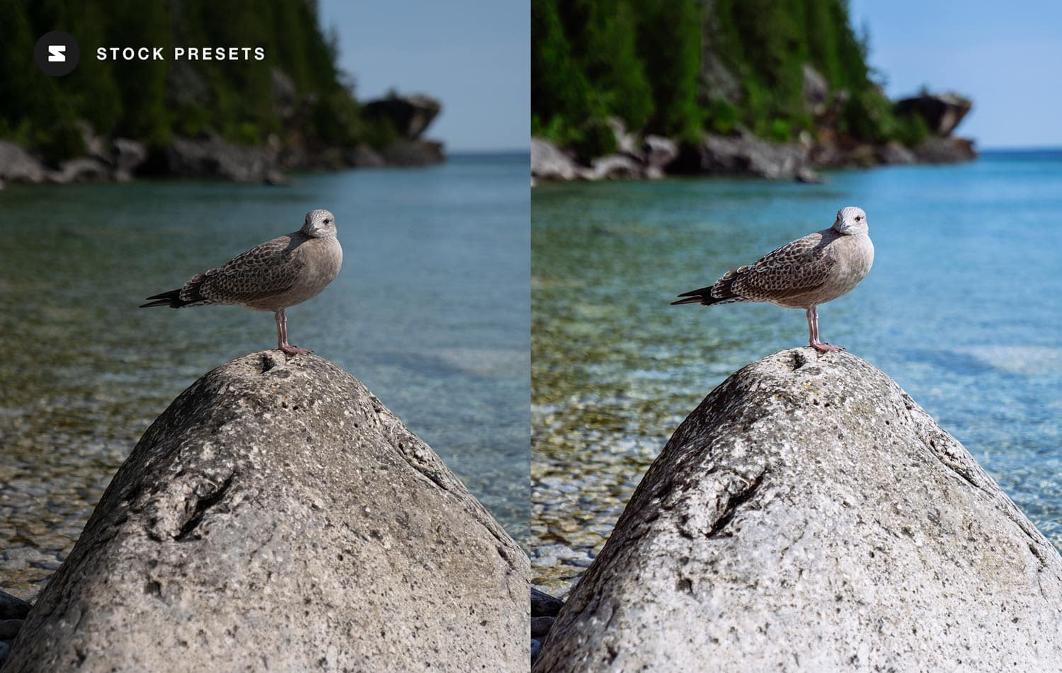 Free-Lightroom-Preset-Scenic-Color-Before-and-After-Video-Stockpresets