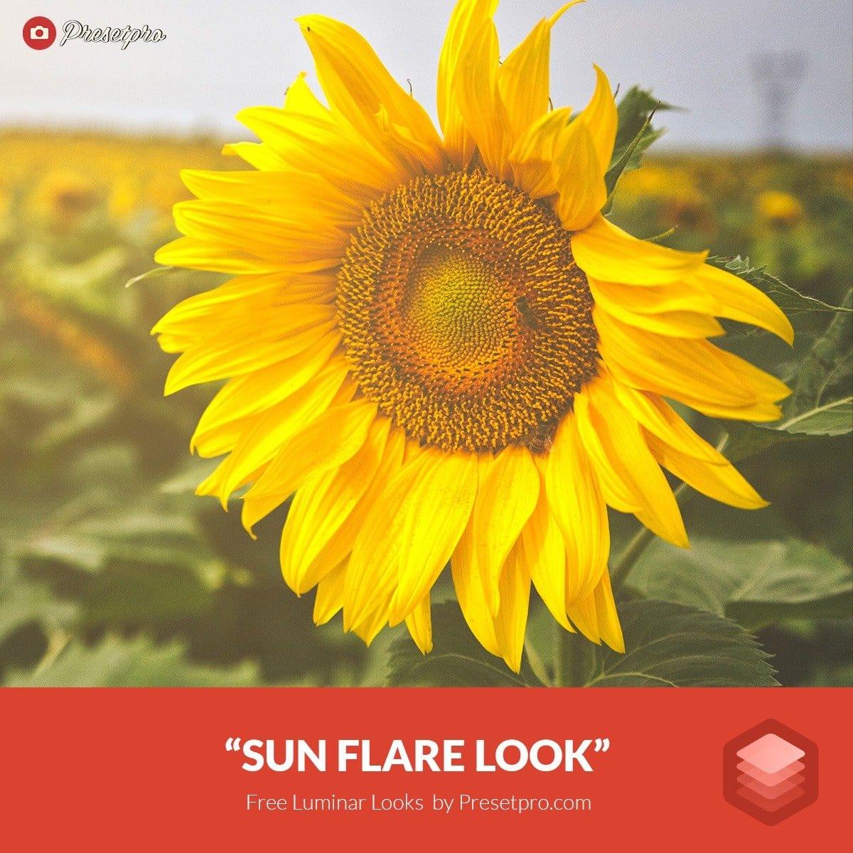 Free-Luminar-Look-Preset-Sunflare-Presetpro.com