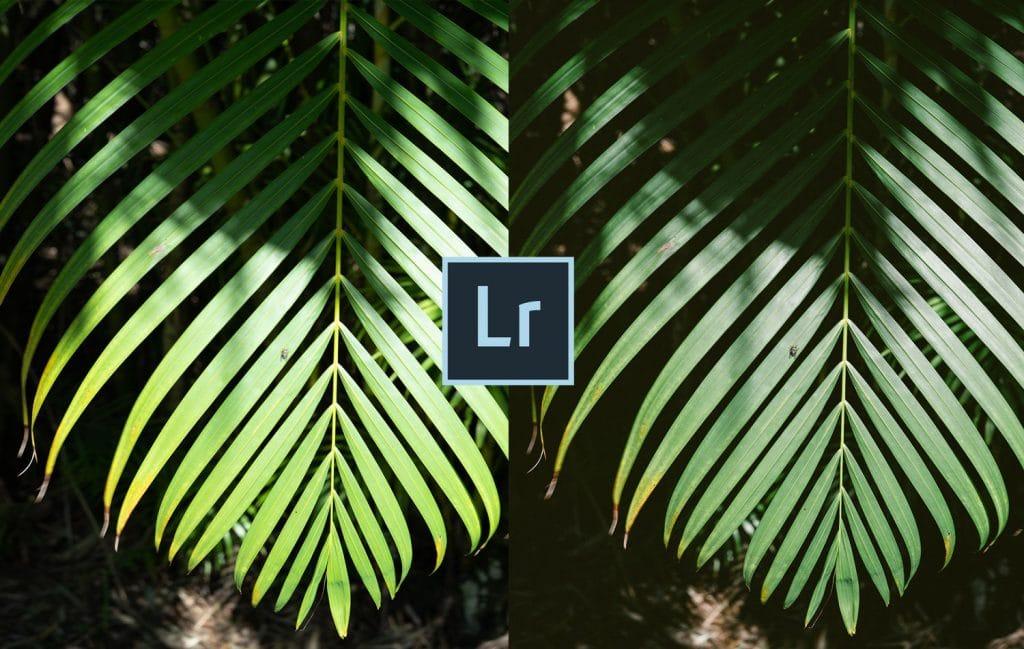 Free-Lightroom-Preset-Lush-Film-Cover-Presetpro.com
