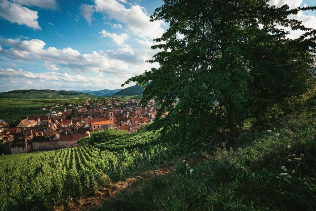 Alsace Wine Region in France